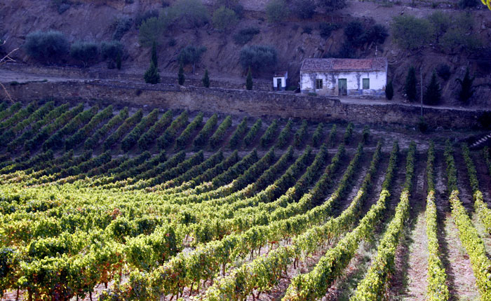 Image - Douro Valley, Portugal - Vesuvio Vineyard