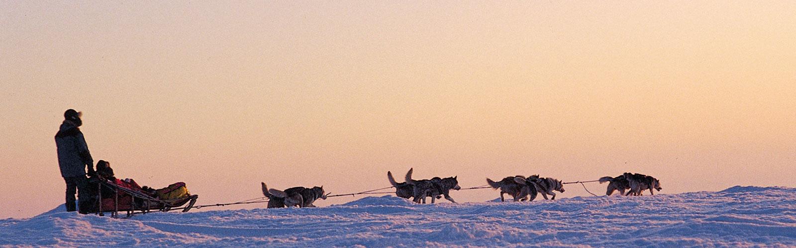 Image - Finland Husky Sledding © Finland Tourist Board