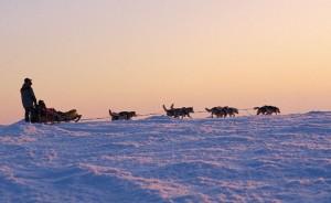 Image - Finland husky sledding - © Finland Tourist Board