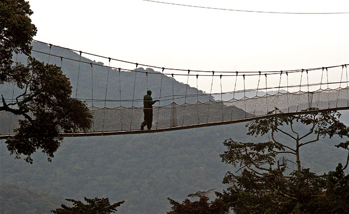 Image: crossing the suspension bridge, Nyungwe NP